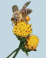 企画展「花粉と花粉症の科学」